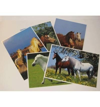 lot de 5 cartes postales cheval grands formats
